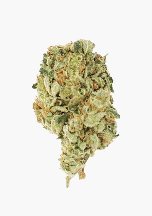 Holi Concentrates Gorilla Skittles Premium Grade Bud