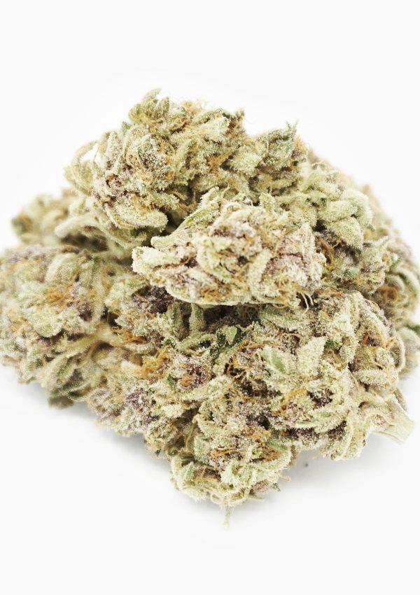Holi Concentrates Hybrid Purple Pugs Breath Flower 2