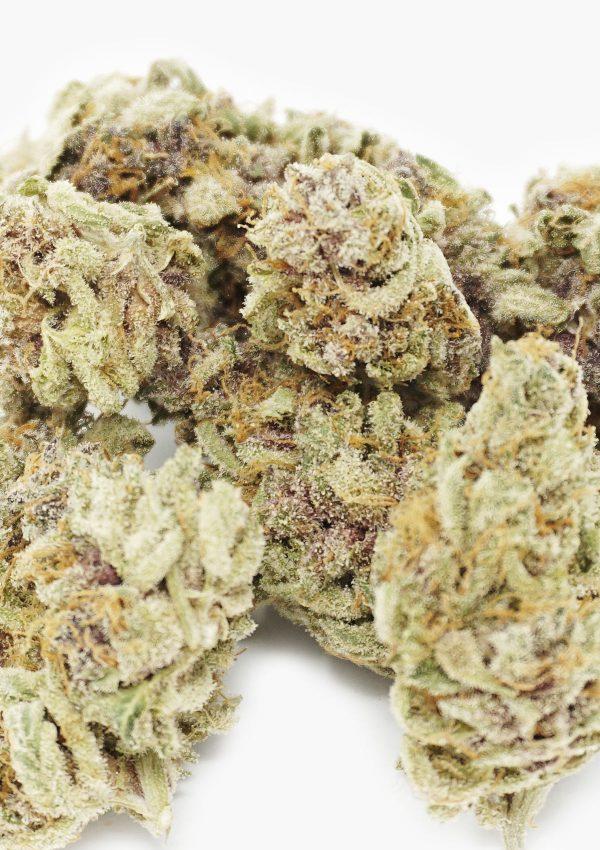 Holi Concentrates Hybrid Purple Pugs Breath Flower 3