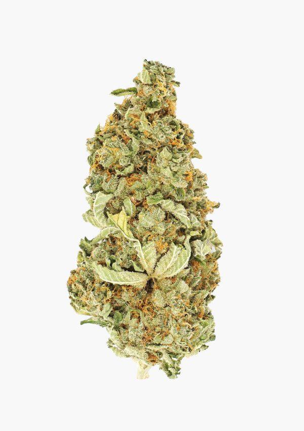 Bud of marijuana random