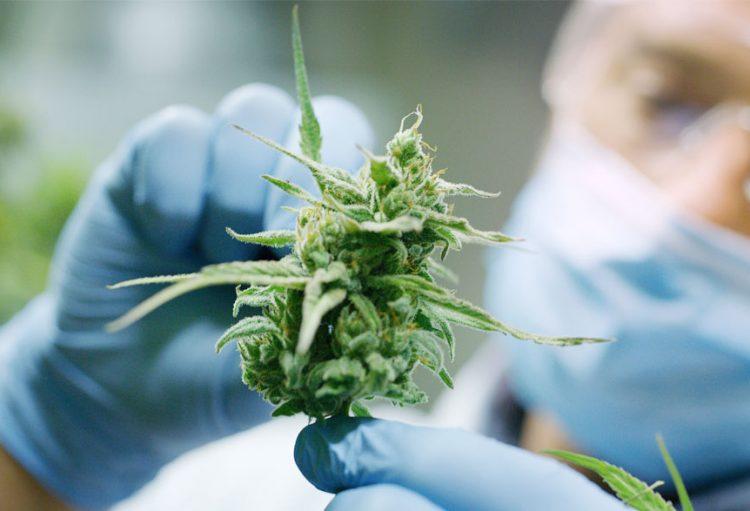 The Newbie's Guide to Cannabinoids
